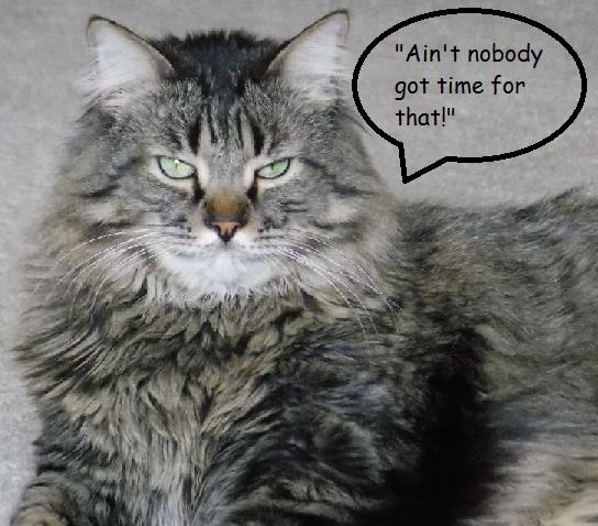 Grumpy Cat says....